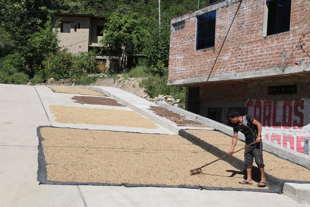 Voor eigen gebruik wordt de koffie gewoon op straat te drogen gelegd.